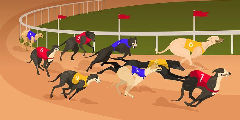 Greyhound racing pack
