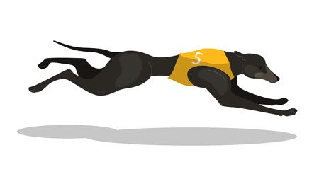 Single dog racing