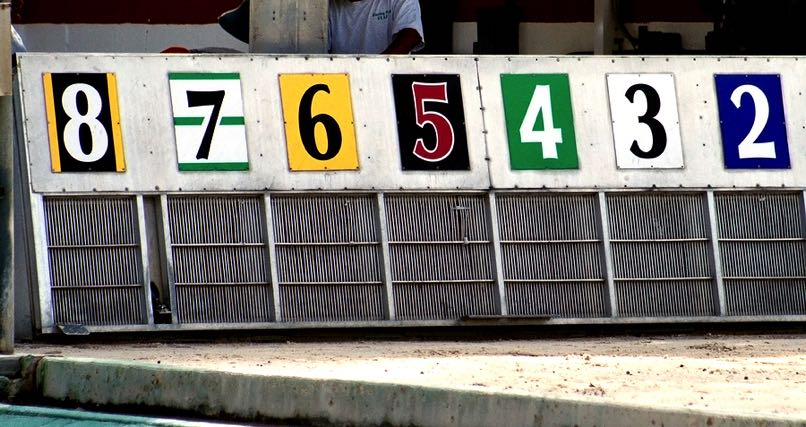 Greyhound racing start gate